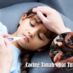 Cacing Tanah Obat Tifus